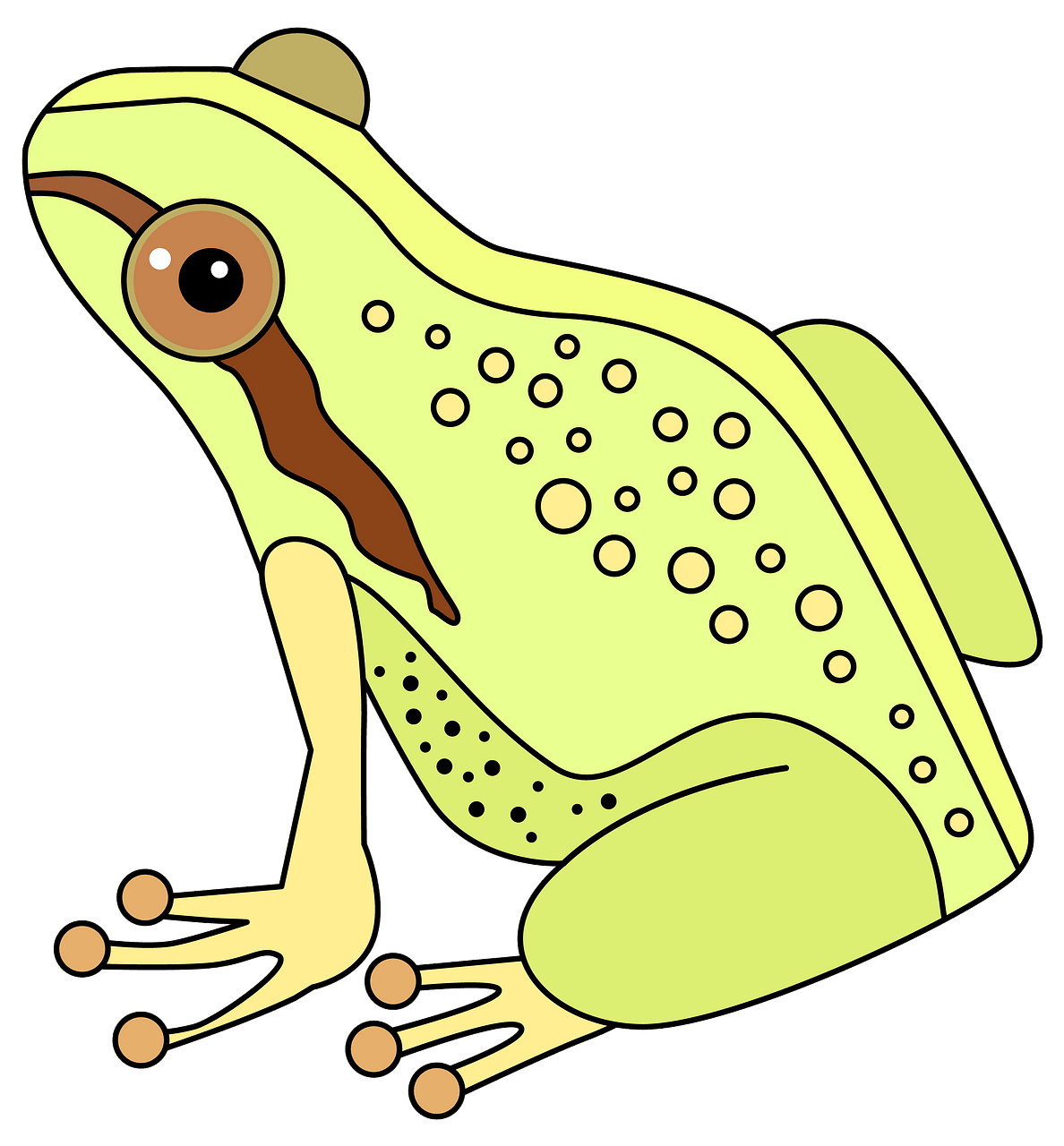 Frog clipart. Free download..