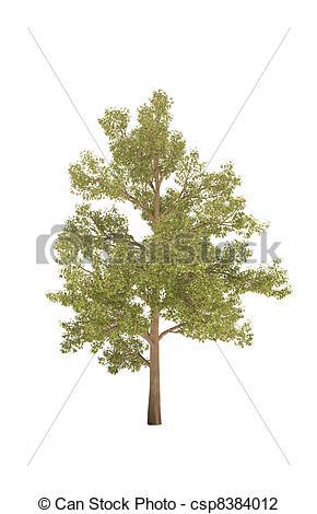 Clip Art of tree oak shadow cg csp8384012.