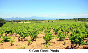Pictures of Vineyards in chateau, Châteauneuf.
