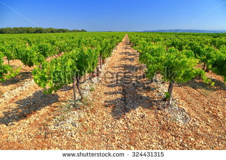 Chateauneuf Du Pape Stock Photos, Royalty.