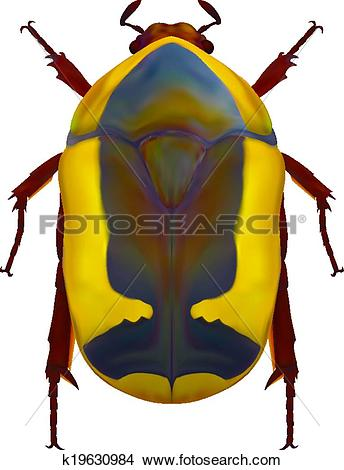 Clipart of African flower chafer k19630984.