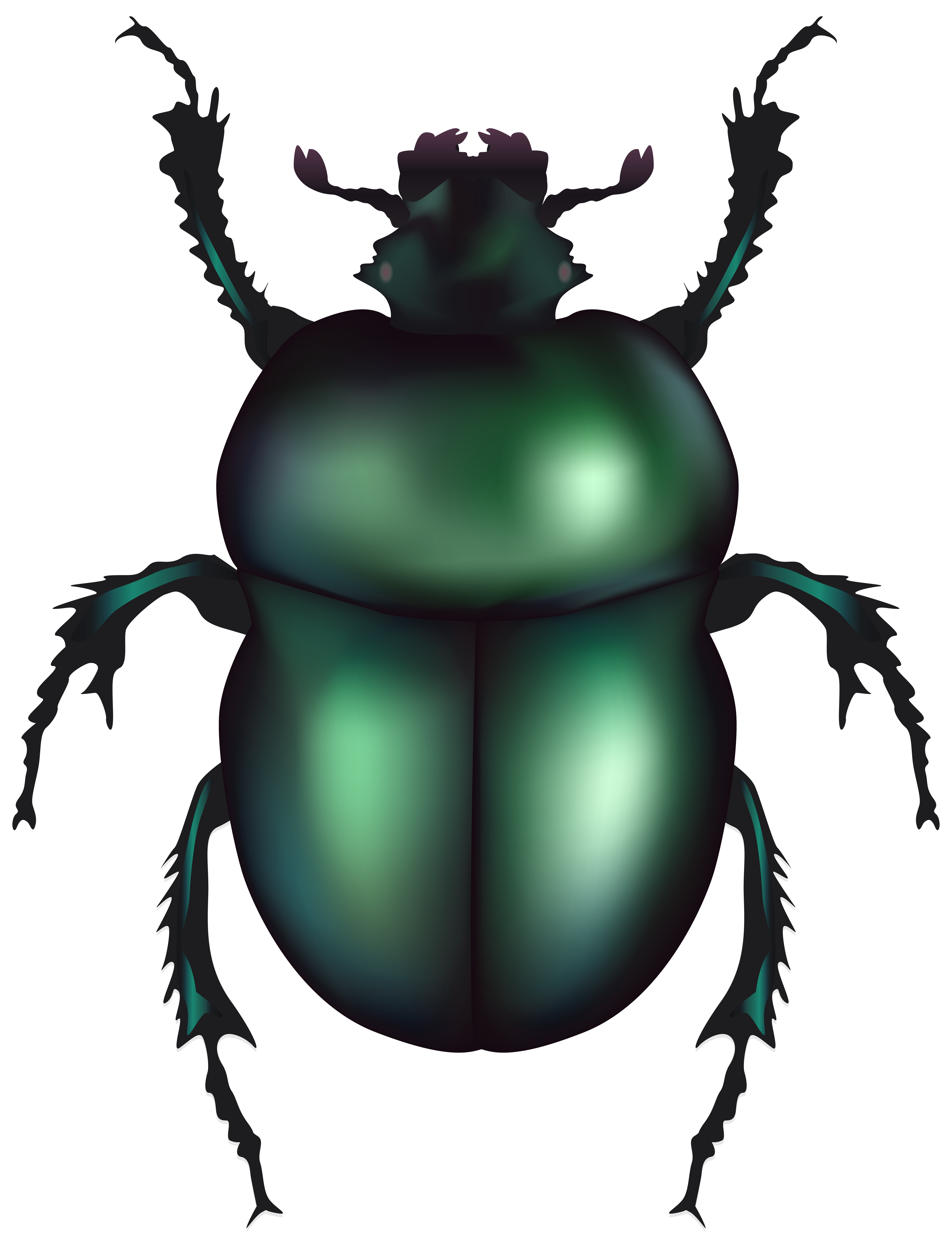 Green Rose Chafer Beetle PNG Clip Art.