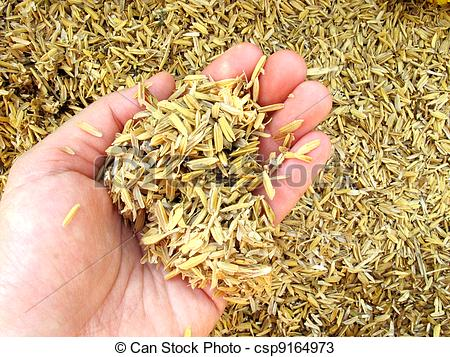 Chaff Stock Photos and Images. 820 Chaff pictures and royalty free.