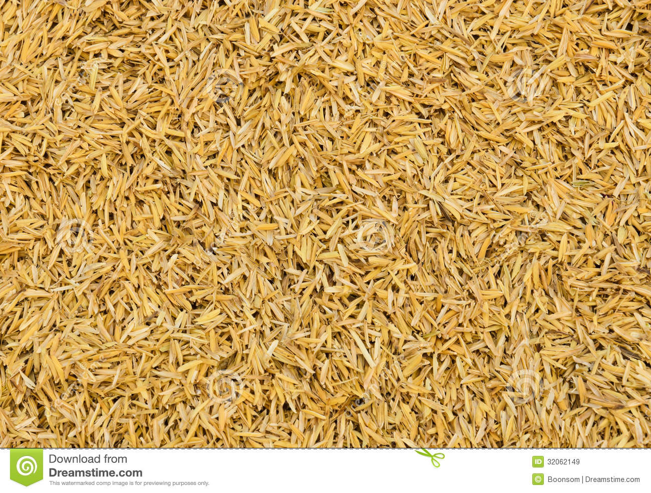 Rice Chaff Background Royalty Free Stock Images.