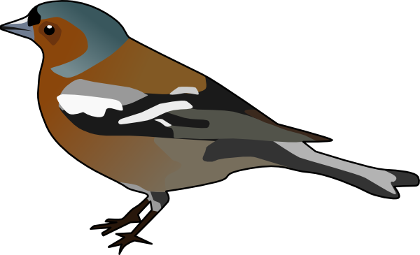 Male Chaffinch Bird Clip Art at Clker.com.