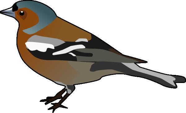 Male Chaffinch Bird Clip Art at Clker.com.