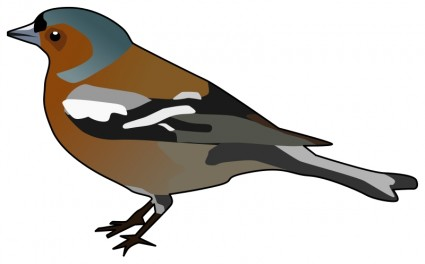 Male Chaffinch Free Vector / 4Vector.