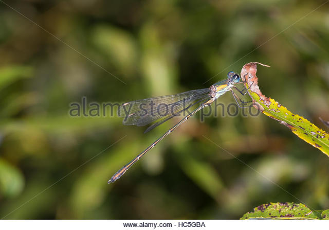 Dragonflies Stock Photos & Dragonflies Stock Images.