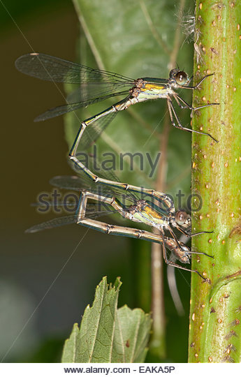 Couple Of Insects Stock Photos & Couple Of Insects Stock Images.