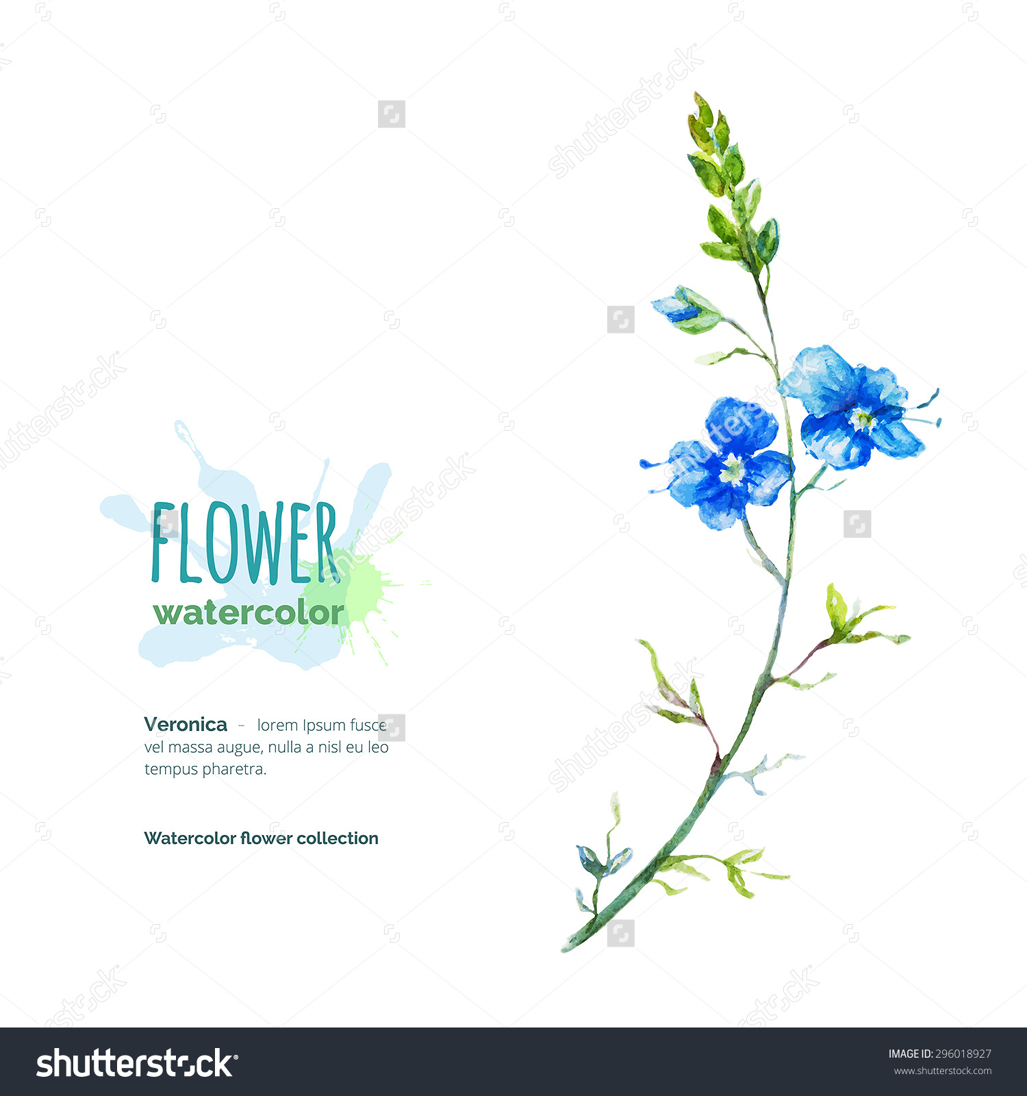 Veronica Chamaedrys Hand Painted Watercolor Speedwell Stock Vector.
