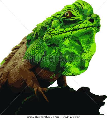 Chamaeleonidae Stock Vectors & Vector Clip Art.