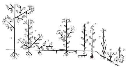 Raunkiær plant life.