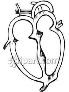 Heart Chambers.