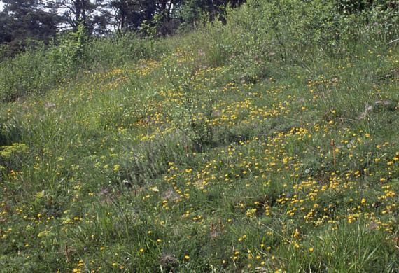La Vallée Monnet Découverte des Sites naturels.