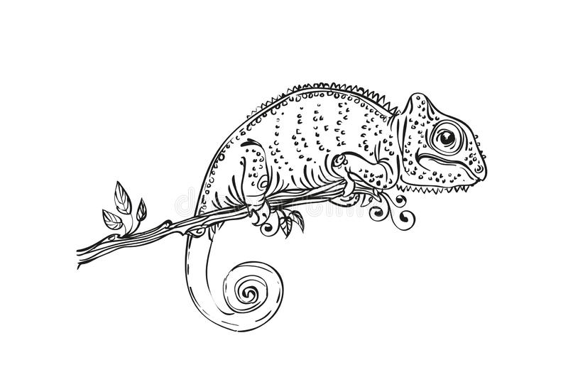 Black White Chameleon Stock Illustrations.