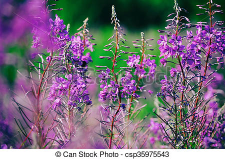 Stock Photo of Blooming Willow.
