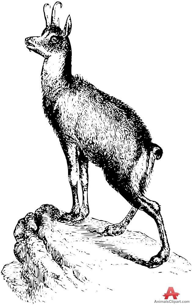 Chamois Sntelope Sketch Portrait.