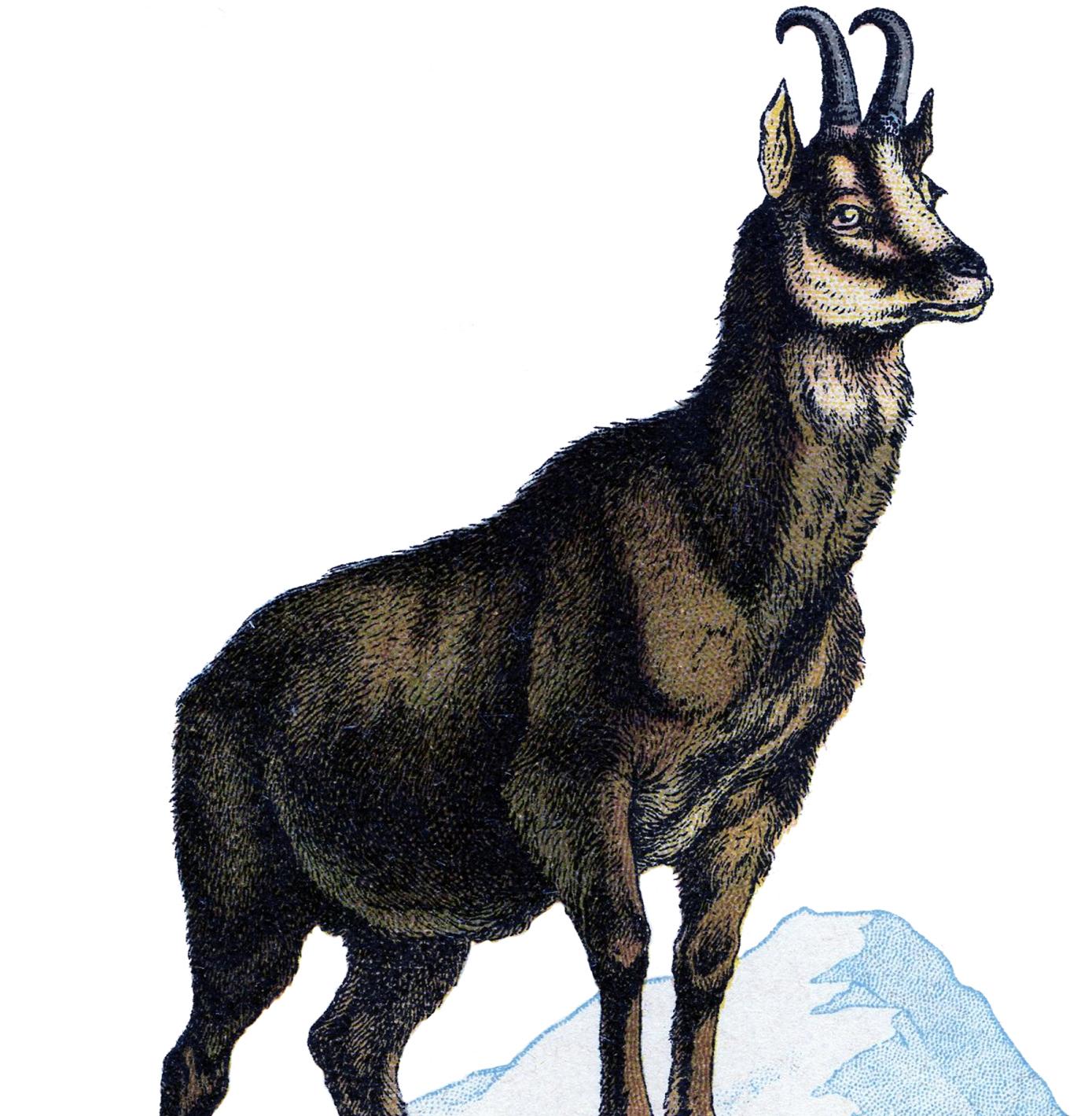 Vintage Goat Clip Art.