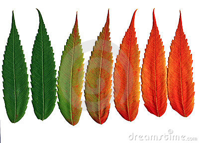 Leaves changing color clipart.