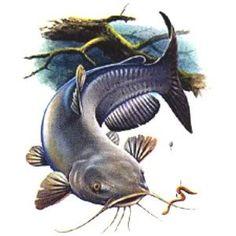 Flathead catfish clipart.