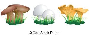 Chanterelle Vector Clipart EPS Images. 422 Chanterelle clip art.