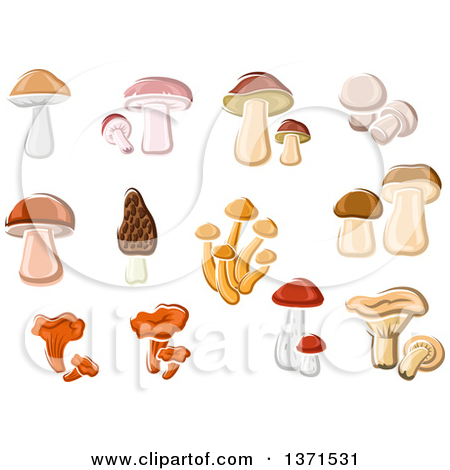 Clipart of Chanterelle, Brown Cap, Birch, Pine, King Bolete.