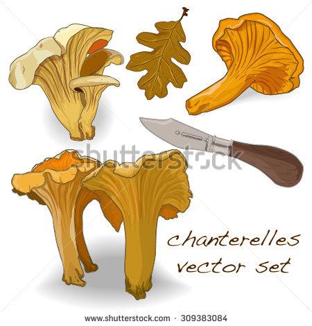 Funnel Chanterelle Stock Vectors & Vector Clip Art.