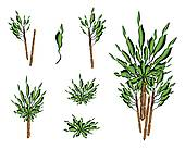 Houseplant Clip Art and Illustration. 1,935 houseplant clipart.