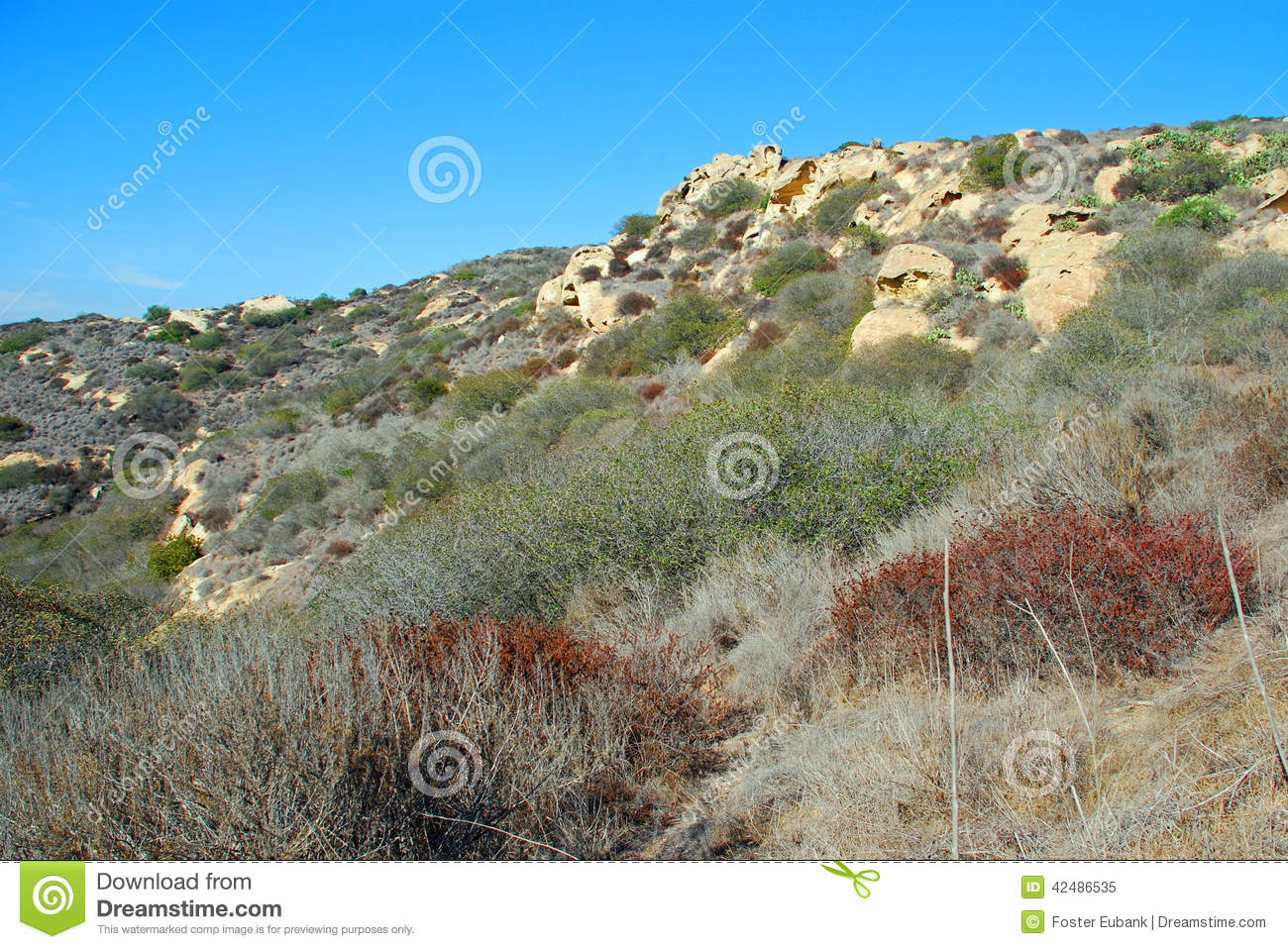 Chaparral In Laguna Canyon, Laguna Beach, CA. Stock Photo.
