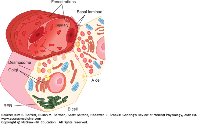 Endocrine Functions of the Pancreas & Regulation of Carbohydrate.
