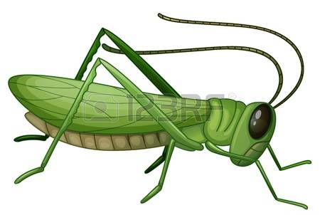 2,068 Grasshopper Stock Illustrations, Cliparts And Royalty Free.