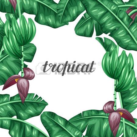 209,247 Frame Leaf Stock Vector Illustration And Royalty Free.