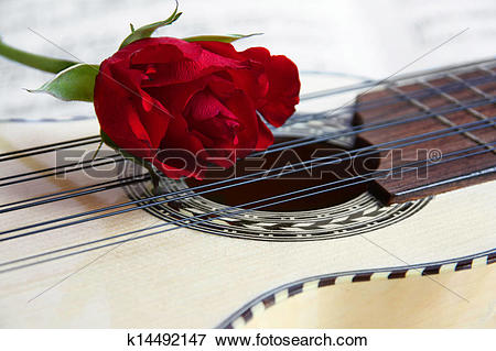 Picture of Red rose on Charango k14492147.