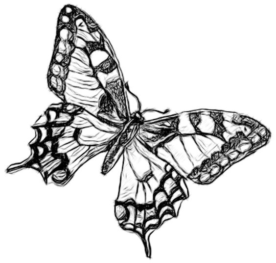 Line Drawing Pencil and Charcoal Art Galleries: Butterfly Penicl.
