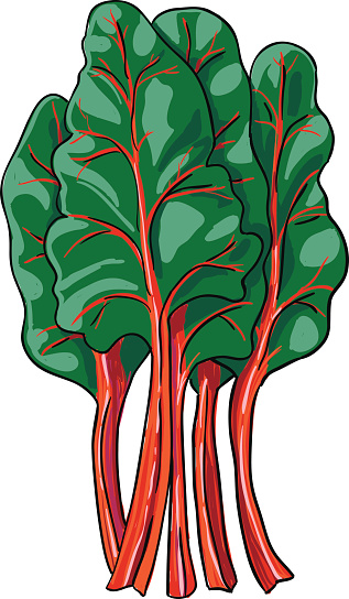 Swiss Chard Clip Art, Vector Images & Illustrations.