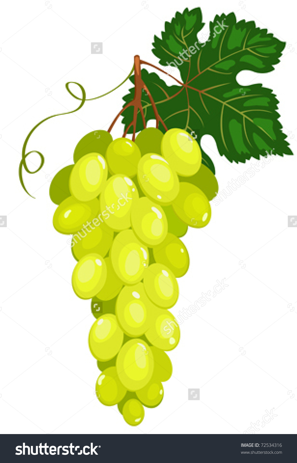 Cluster Dark Green Grapes Isolated On Stock Vector 72534316.
