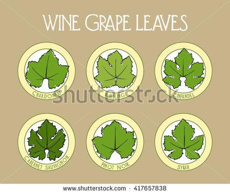 Pinot Noir Wine Stock Photos, Royalty.