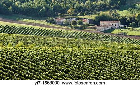 Stock Photography of Farm in the vineyard of Cognac, Charente.