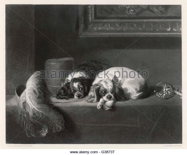 Landseer Stock Photos & Landseer Stock Images.