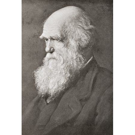1000+ ideas about Robert Darwin on Pinterest.
