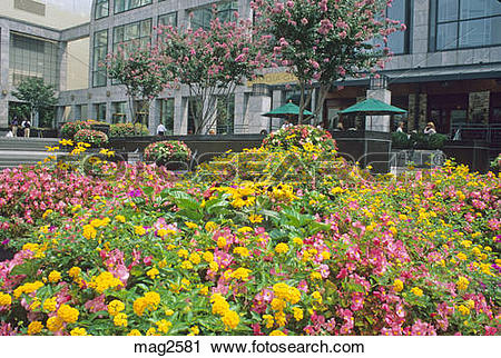 Stock Photography of flower garden at First Union Plaza Charlotte.