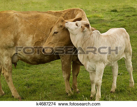Stock Photo of spring time animals.