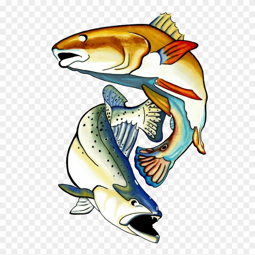 Redfish.