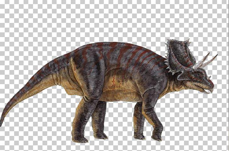 Chasmosaurus Ceratopsia Triceratops Microceratus.