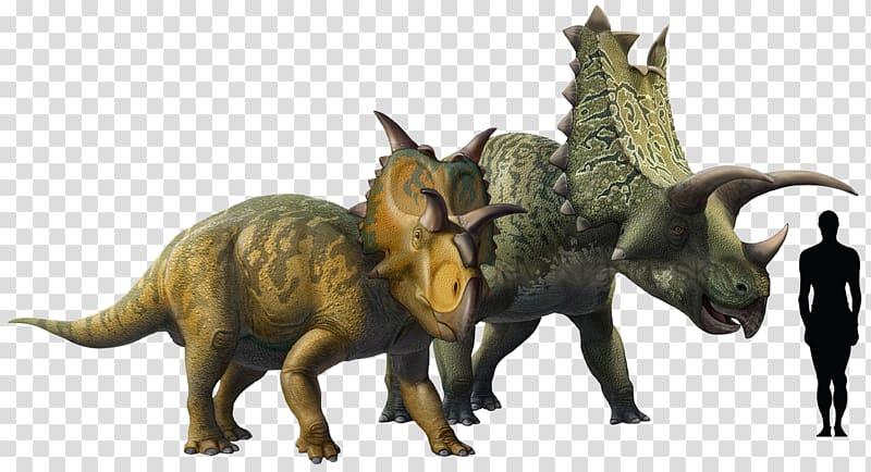 Pentaceratops Chasmosaurus Triceratops Ceratopsia Late.