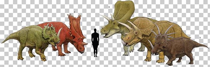Torosaurus Centrosaurus Triceratops Chasmosaurus.