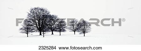 Stock Photo of Trees in a snowy field in chatsworth park.
