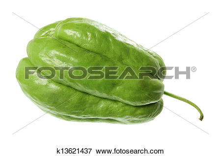 Picture of Chayote k13621437.