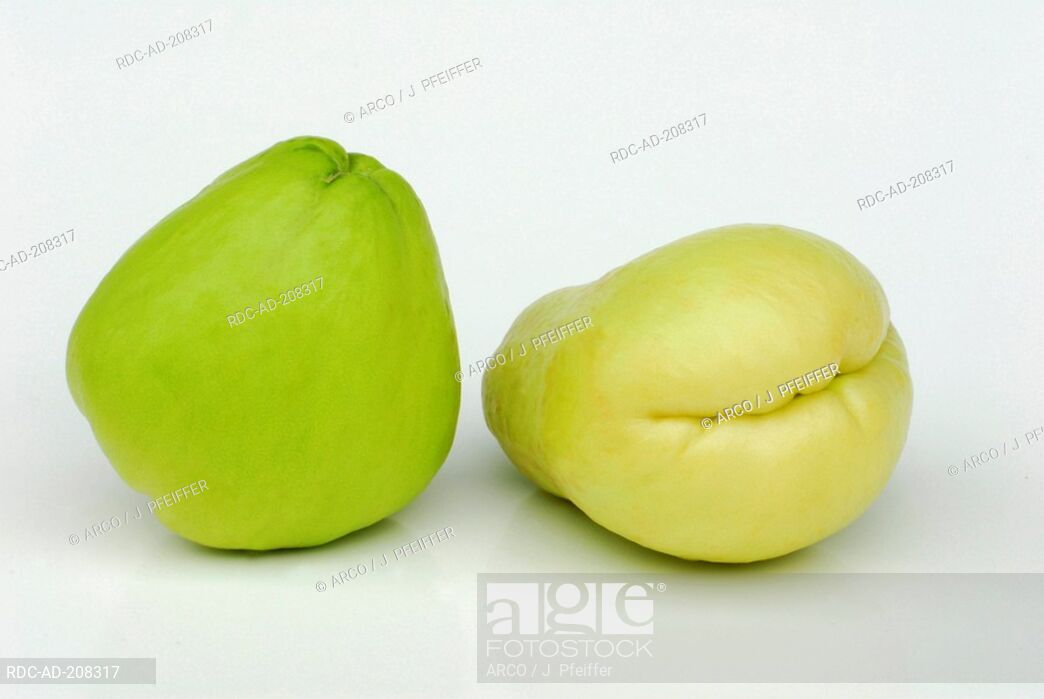 Sechium edule cucurbitaceae chayote Stock Photos and Images.
