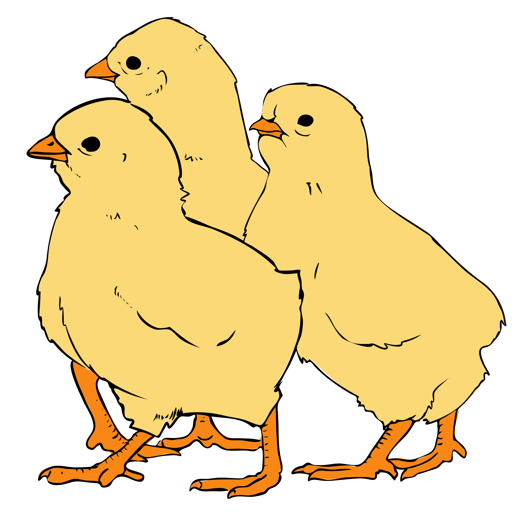 Chicks clipart #3